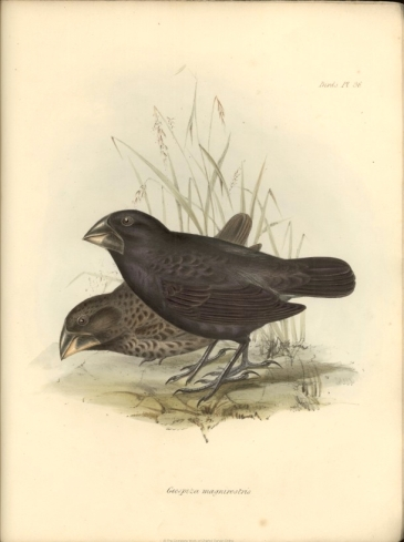 1839_Zoology_F8.11_fig067