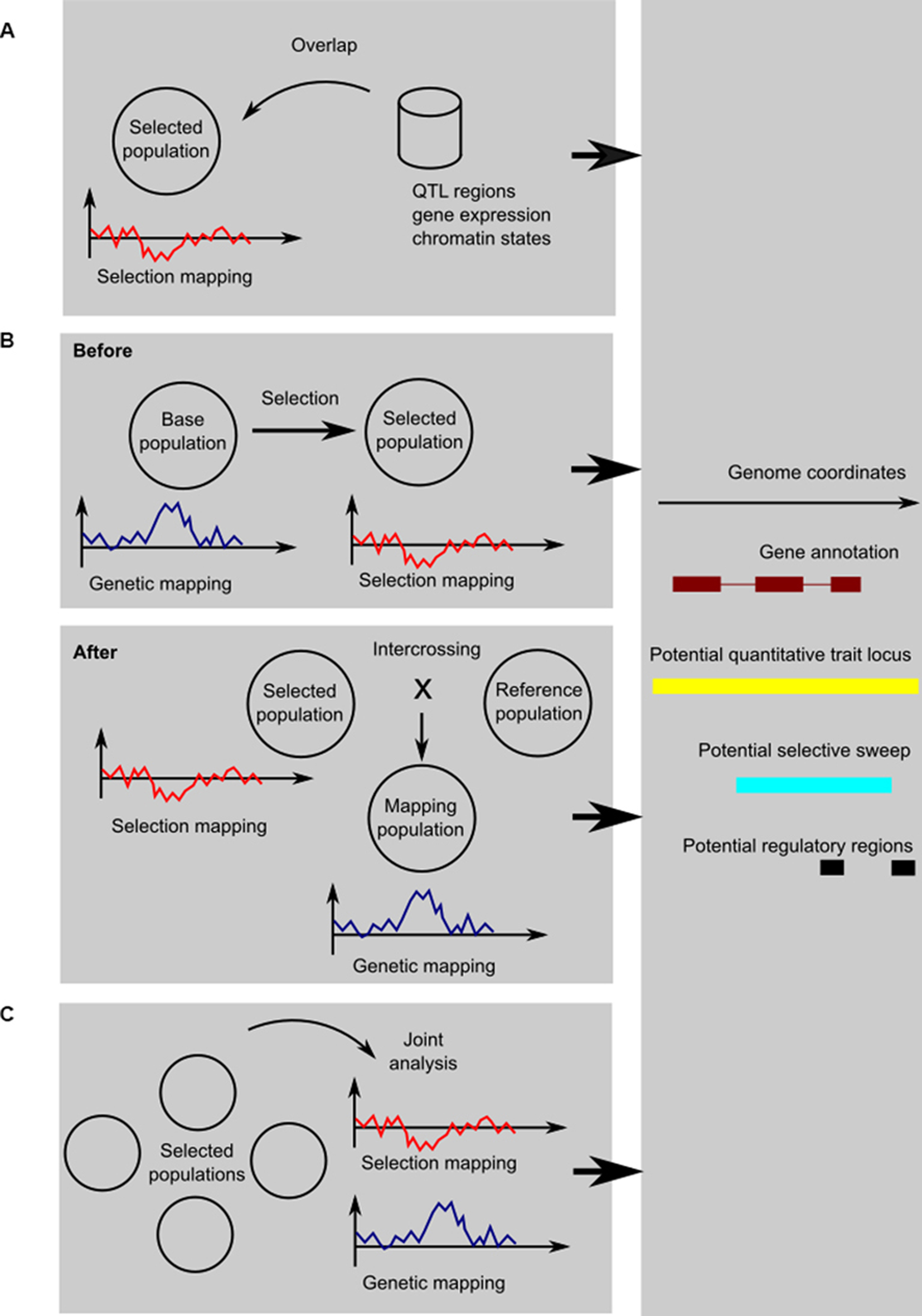 genetic mapping | On unicorns and genes on human genome, cognitive mapping, human genome project, restriction maps, thomas morgan's linkage mapping, gene map, molecular genetics, quantitative trait locus, three-point cross, community mapping, dna mapping, mental mapping, mendelian inheritance, snp genotyping, genome-wide association study, association mapping, genetic marker,
